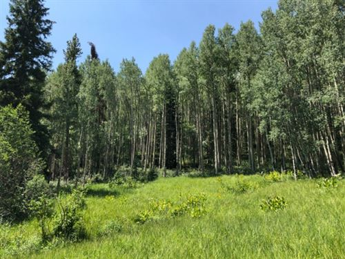 9453899, Extremely Lush &Amp : Garfield : Chaffee County : Colorado