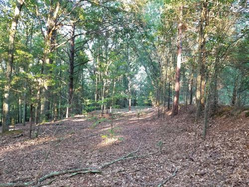 Creek Front Tract Lots Of Game : Watkinsville : Oconee County : Georgia