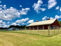 Beautiful 37 Ac Ready For Horses : Smithdale : Amite County : Mississippi