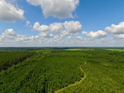 127 Acre Hunting And Timber Investm : McRae : Telfair County : Georgia
