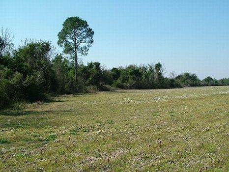308+- Farmland : Abbeville : Wilcox County : Georgia