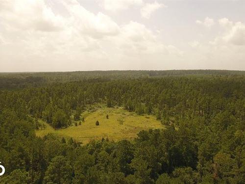 81 Acre Recreational/Timberland Tra : Coldspring : San Jacinto County : Texas