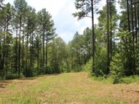 Hunting / Recreational Tract : Lexington : Oglethorpe County : Georgia
