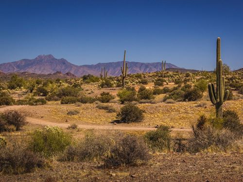 300 Acres In Concho, AZ : Concho : Apache County : Arizona