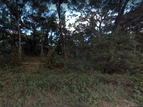 .24 Acres In Summerfield, FL : Summerfield : Marion County : Florida
