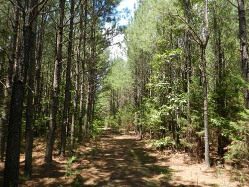 158 Acre Haven Near Bethel Springs : Bethel Springs : McNairy County : Tennessee