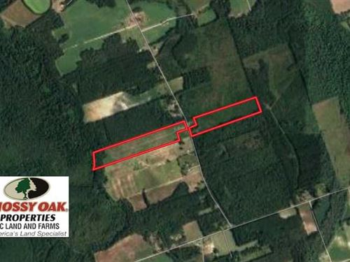 47 Acres of Hunting Land For Sale : New Zion : Clarendon County : South Carolina