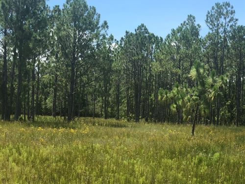Rivercreek Estates : Wimauma : Hillsborough County : Florida