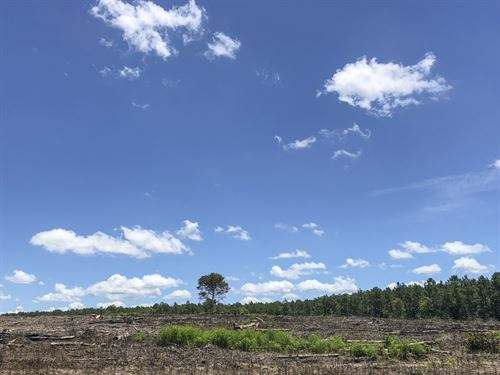 94 Acres Paces Creek : Corrigan : Polk County : Texas