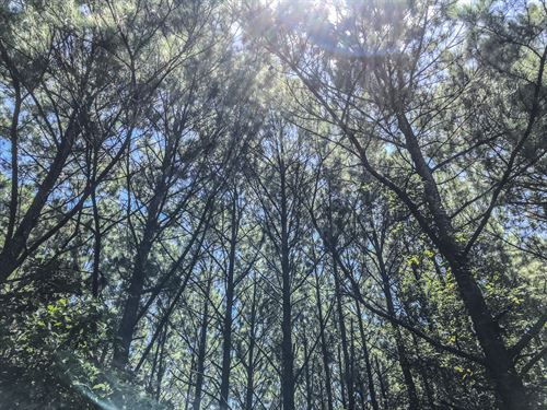 48 Acres Paces Creek : Corrigan : Polk County : Texas