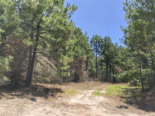 90 Acres Paces Creek : Corrigan : Polk County : Texas