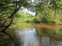 Lynches River Tract : Lynchburg : Lee County : South Carolina
