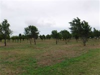 Park Setting Acreage.4.5 Acres : Hinton : Caddo County : Oklahoma