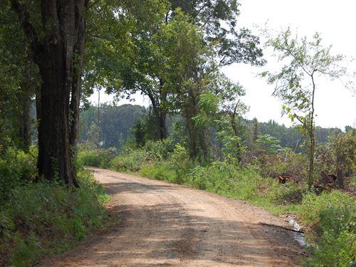 Jones County Bargin : Macon : Jones County : Georgia