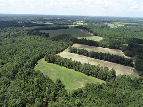 164 Acres Cultivated, Wooded, Creek : Waynesboro : Burke County : Georgia