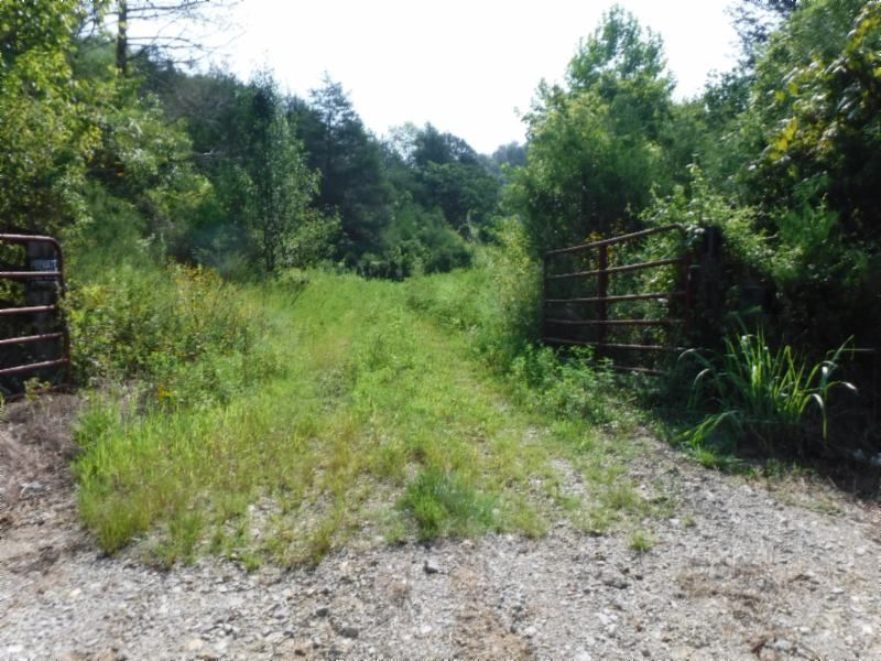34 Acres Cumberland River Frontage : Burkesville : Cumberland County : Kentucky