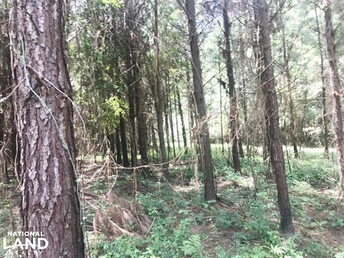 Sipsey River Hunting Tract : Hubbertville : Fayette County : Alabama