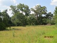 Hunting Property & Camp House : Warriorstand : Macon County : Alabama
