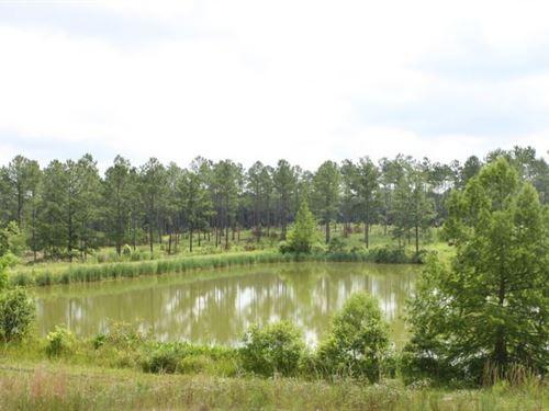 Swamp Creek Preserve : Havana : Gadsden County : Florida