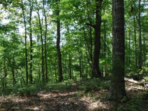 23.77 Acres Secluded, Recreational : Hilham : Clay County : Tennessee