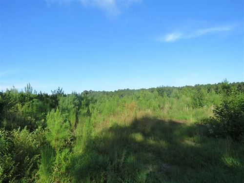 27.72 Acres of Timber And Hunting : Ivanhoe : Pender County : North Carolina