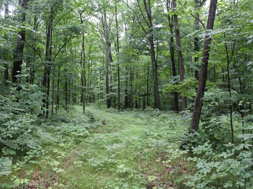 Great Hunting With Building Sites : Marshfield : Wood County : Wisconsin