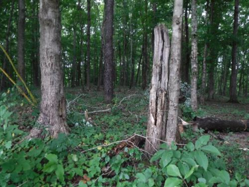 9Ac Totally Wooded Level To Rolling : Hilham : Jackson County : Tennessee
