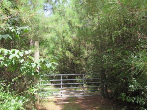 30 Acres In Osyka, Ms : Osyka : Pike County : Mississippi