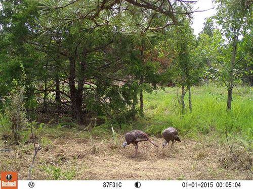 Off-Grid Prime Recreational Huntin : Rattan : Pushmataha County : Oklahoma
