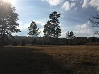 Building Lot For Sale on 1.1 Acre : Searcy : White County : Arkansas