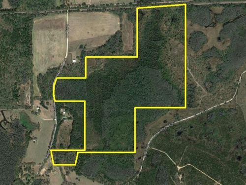 Pettis Springs Circle Tract : Greenville : Alachua County : Florida