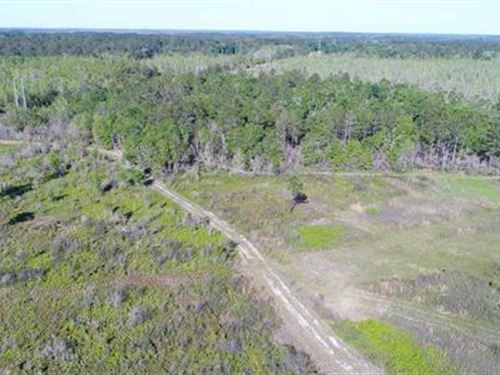 Superior Hunting Land With Cabin : Monticello : Jefferson County : Florida