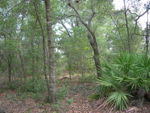 35 Ac On Goodsen Prairie, A-438 : Melrose : Putnam County : Florida