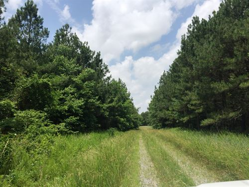 Marion Conn North Tract : Marion : Crittenden County : Kentucky