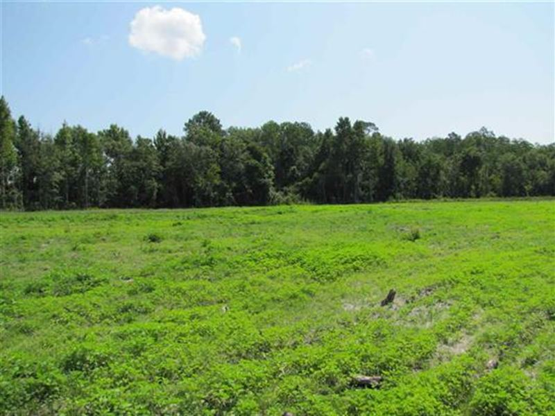 Gorgeous Farm Land & Great Location : Madison : Madison County : Florida