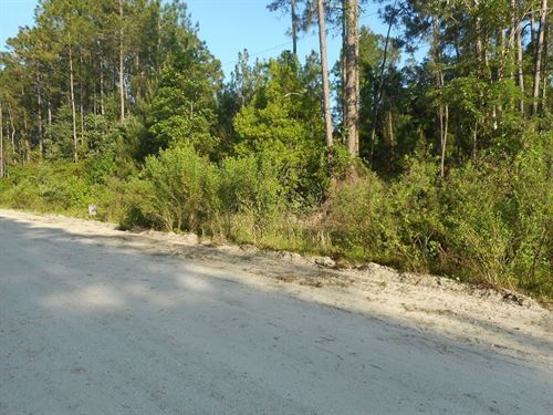 Near Quarter-Acre On Domingo Road : Satsuma : Putnam County : Florida
