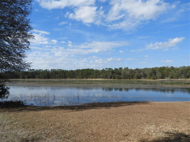 29 Beautifully Wooded Acres, Wl-102 : Keystone Heights : Clay County : Florida