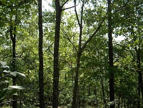 10 Wooded Acres at Mt. Cheaha : Lineville : Clay County : Alabama