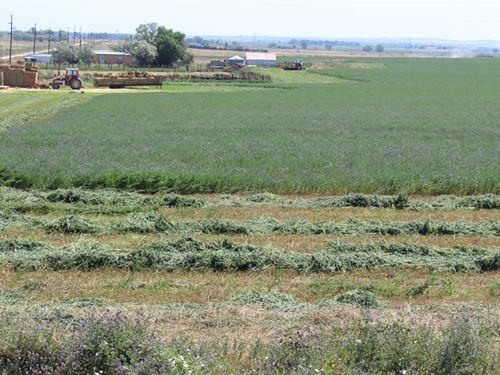 Alworth Hay Farm : Torrington : Goshen County : Wyoming