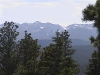Mountain Wooded Acreage Southern : Weston : Las Animas County : Colorado