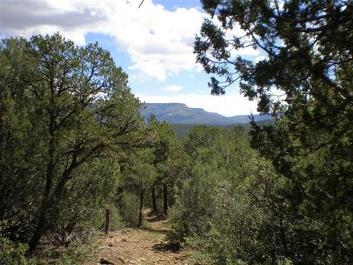Wooded Mountain Acreage Trinidad : Trinidad : Las Animas County : Colorado