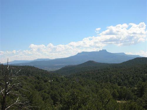 Remote Mountain Property Trinidad : Trinidad : Las Animas County : Colorado