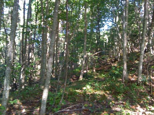 Large Private Lot Cove Creek Gated : Tazewell : Virginia