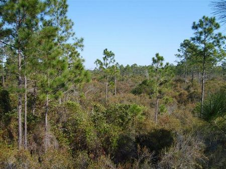 60 Acres For $1050 Per Acre : Perry : Taylor County : Florida