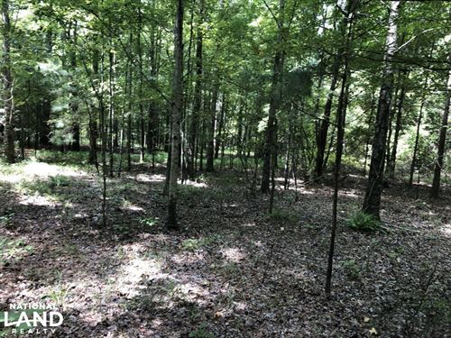 Midway Road Timber Investment : Terry : Hinds County : Mississippi