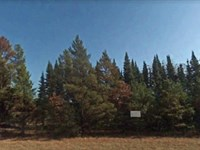 Wooded Lot Located In Juneau Co Wi : Necedah Wi : Juneau County : Wisconsin