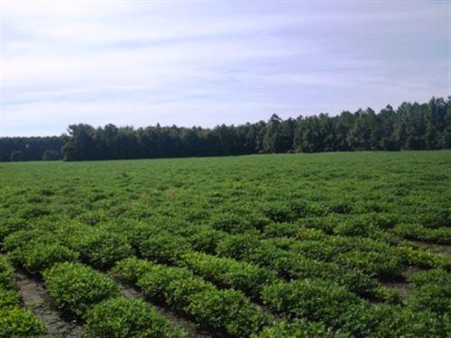 Cribbs Farm Parcel 2 : Brooklet : Bulloch County : Georgia