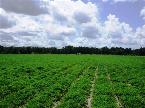 Rad Denmark Farm Tract 1 : Pembroke : Bulloch County : Georgia