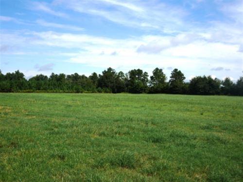 Johnny White Farm Tract 1 : Nevils : Bulloch County : Georgia