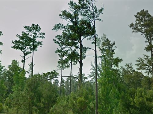 Flagler County, Fl $400,000 Neg. : Bunnell : Flagler County : Florida